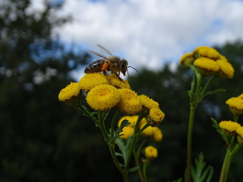 Bee, Flower, Pollen, Insect, Nature, Yellow, Macro