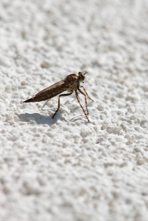 Macro, Brake, Insect, Itching, Sting