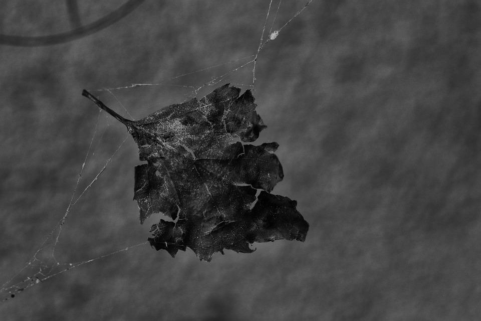 Leaf, Cobweb, Nature, Spider Web, Macro