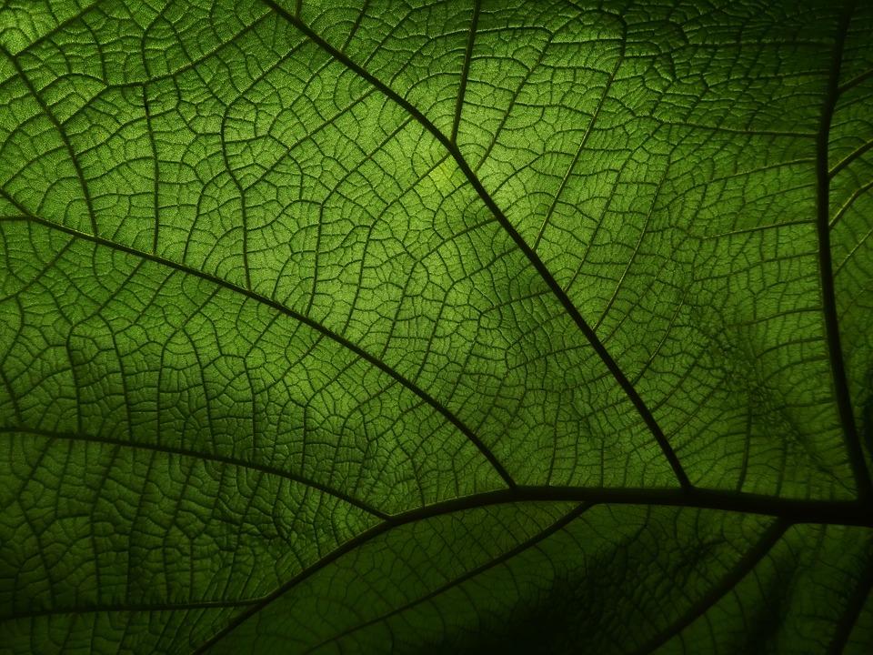 Leaf, Veins, Macro