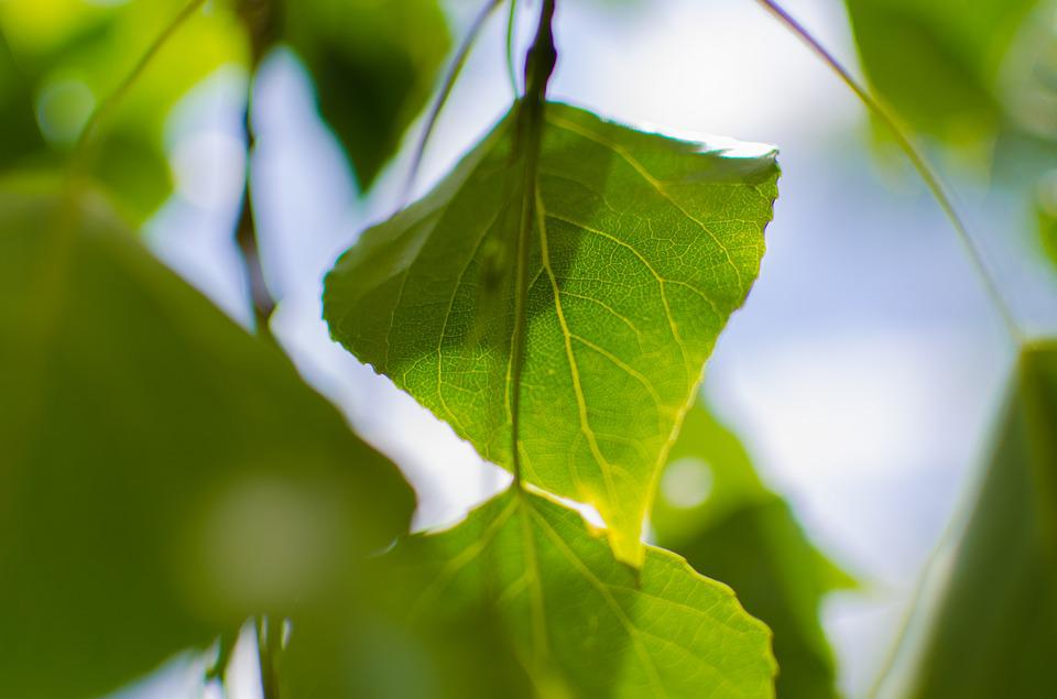 Close-up, Green, Leaves, Macro