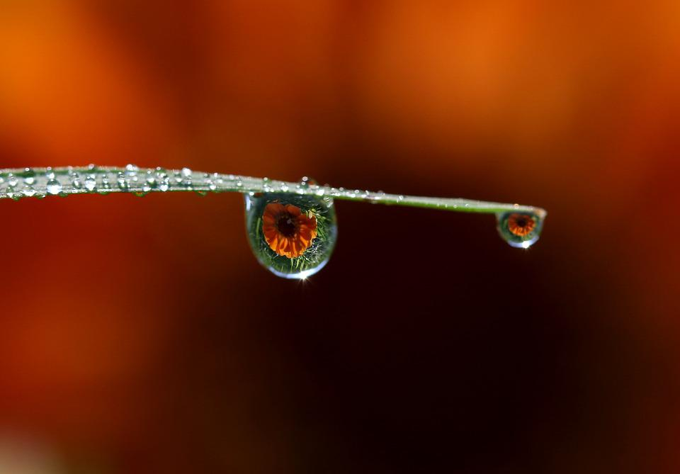 Drops, Water, Dew, Macro, Grass, Rain, Leaves, Nature