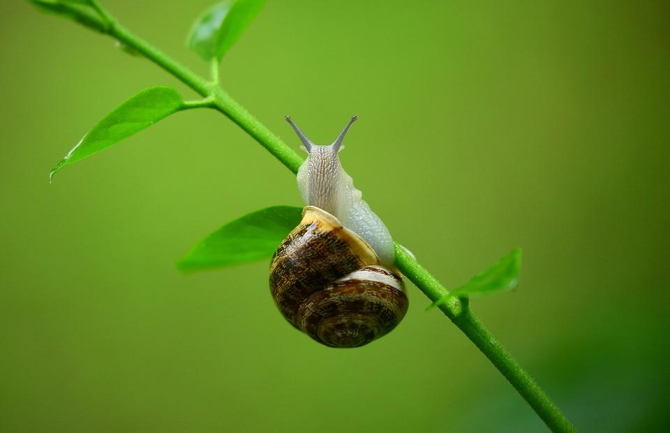 Animal, Snail, Mollusk, Gastropod, Leaves, Macro, Slime