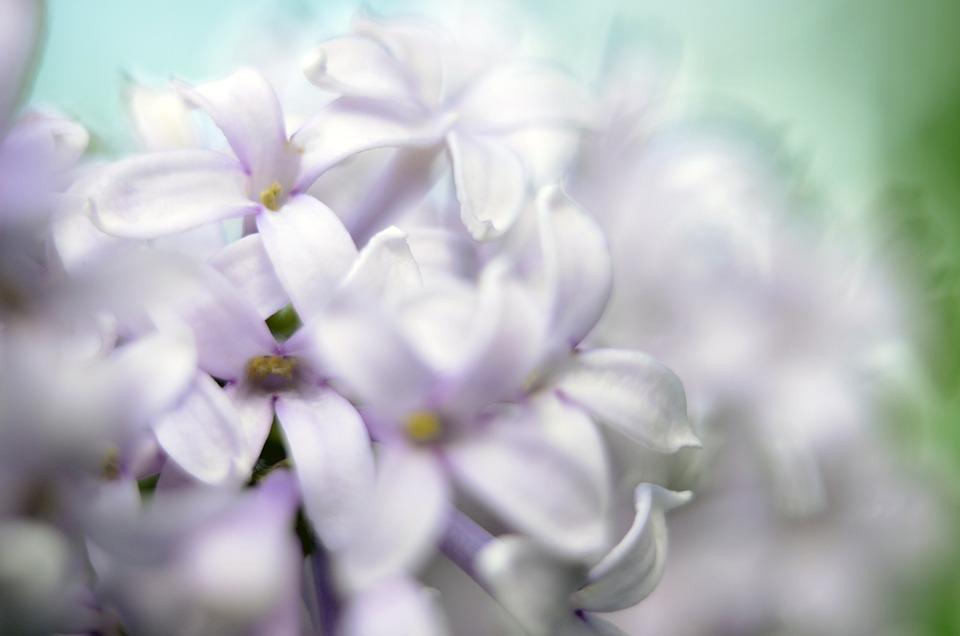 Flowers, Background, Macro, Pink, Light, Nature, Park