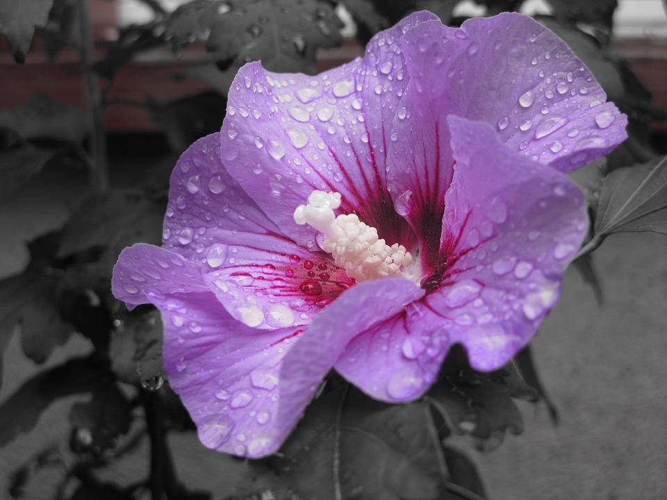 Flowers, Plant, Nature, Macro, Garden, Close