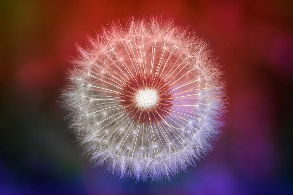 Nature, Dandelion, Colorful, Macro, Spring, Seeds