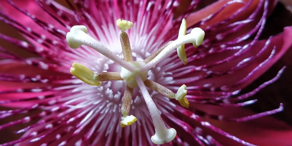 Nature, Passion, Flowers, Macro, Purple