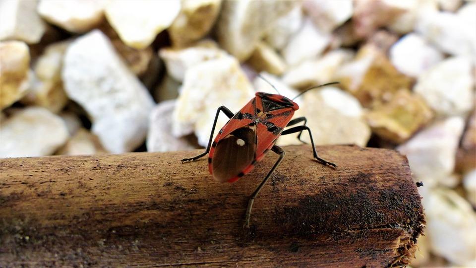 Nature, Insect, Petit, Macro