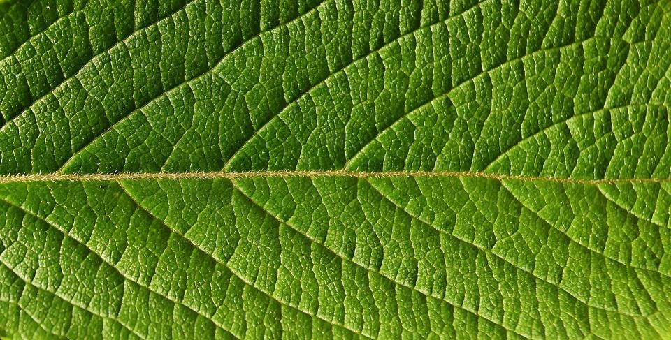 Leaf, Close, Nature, Tree, Macro