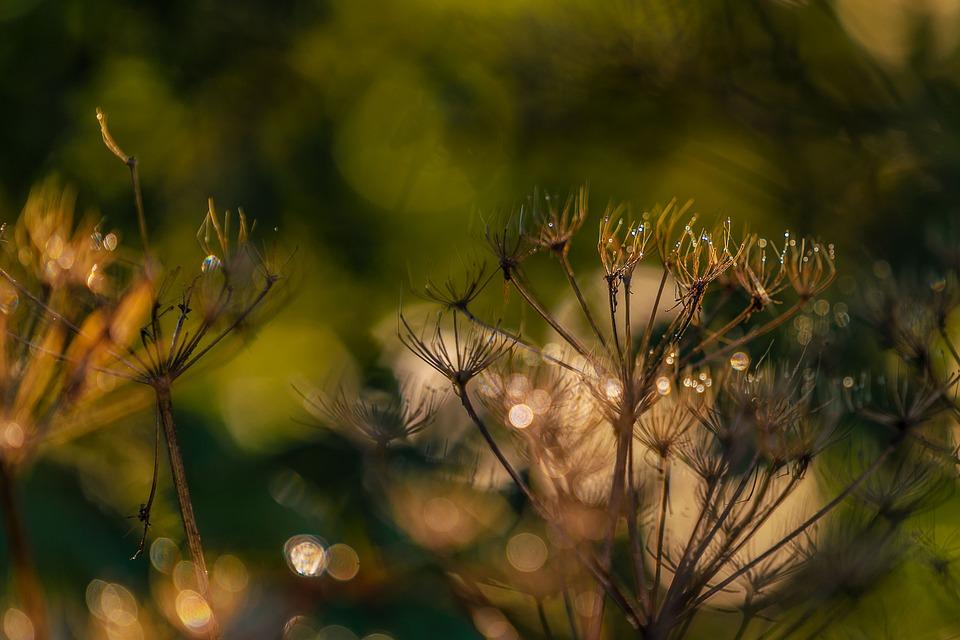 Nature, Plant, Dew, Wet, Close Up, Macro, Wallpaper