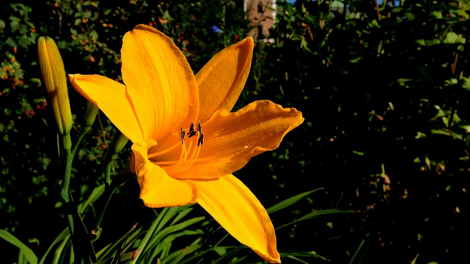 Flower, Yellow, Yellow Flower, Macro, Closeup, Ornament