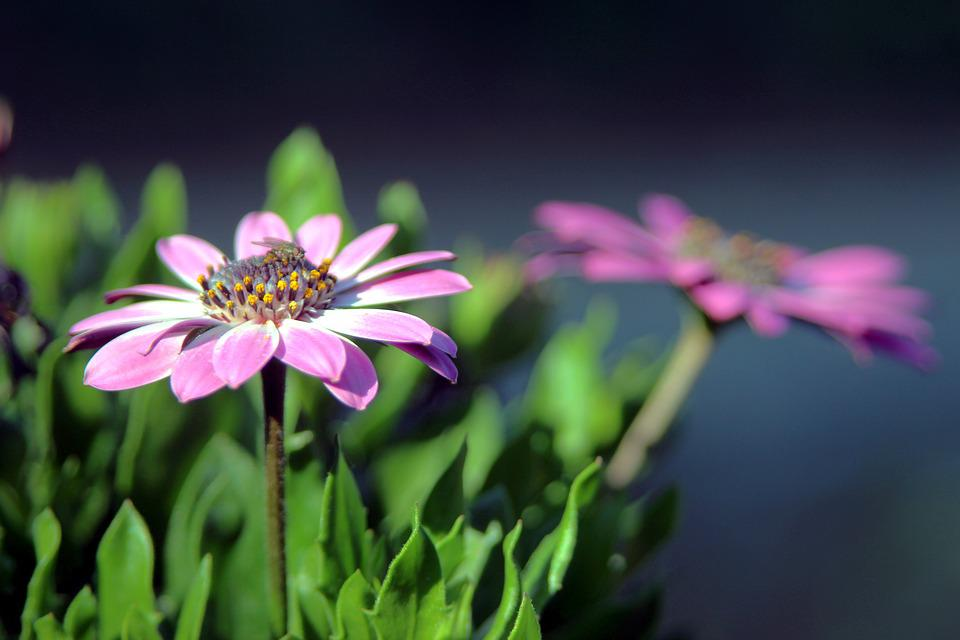 Flower, Macro, Petals, Close Up, Petal