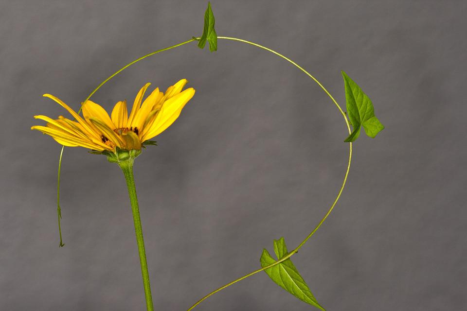 Flower, Vetch, Close, Macro Photography, Macro, Garden