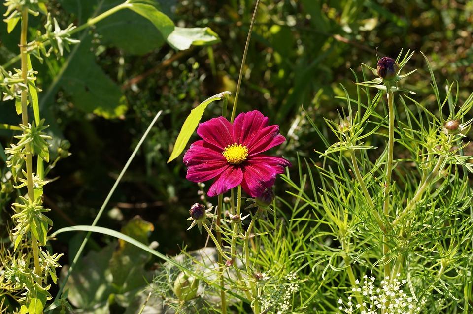Macro, Flower, Pink, Macro Photography, Sunflower