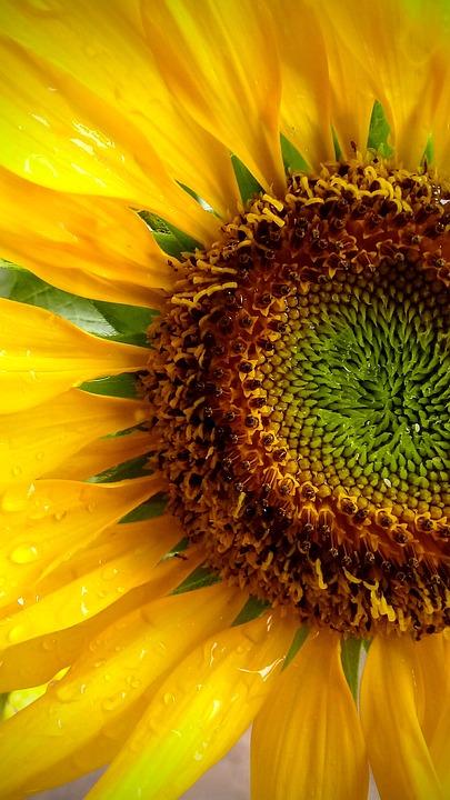 Flowers, Sun, Blossom, Plant, Nature, Macro, Gorgeous