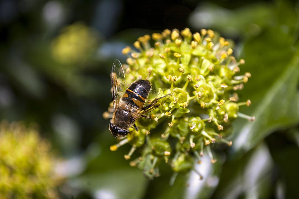 Plant, Insect, Nature, Macro