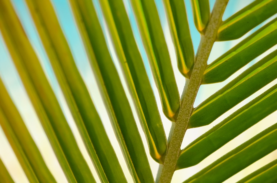 Plant, Leaf, Macro, Palm, Summer, Leaves, Tropical