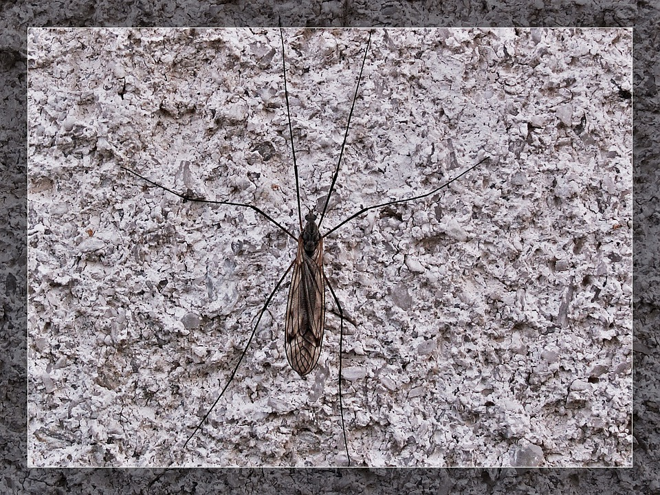 Portrait, Insect, Wall, Macro, Structure, Midge