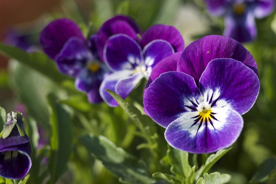 Flower, Close-up, Purple, Green, Macro, Nature, Garden