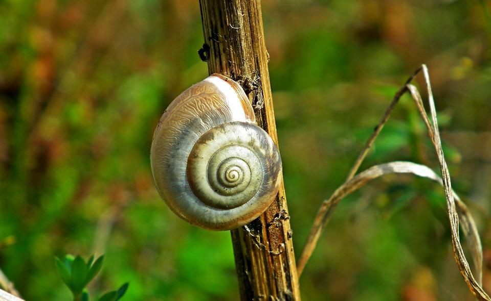 Seashell, Snail, Meadow, Grass, Macro, The Creation Of