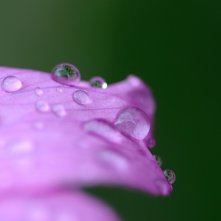 Flower, Drop, Water, Macro