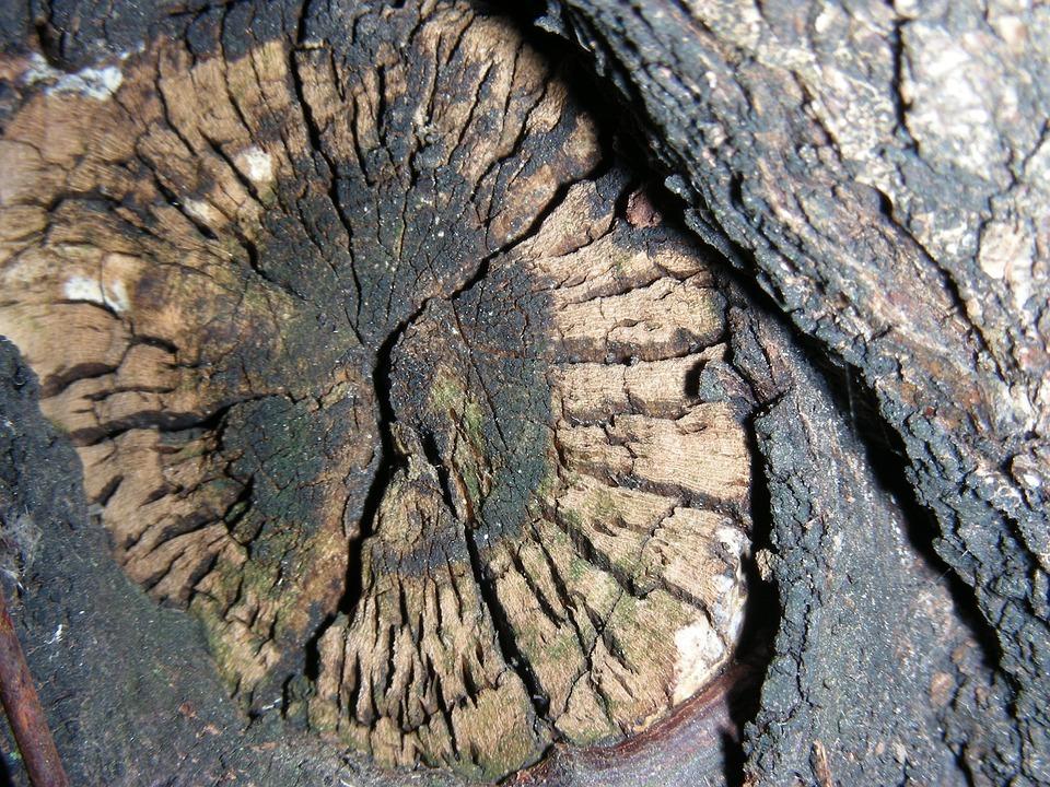 Wood, Age, Dried Up, Macro