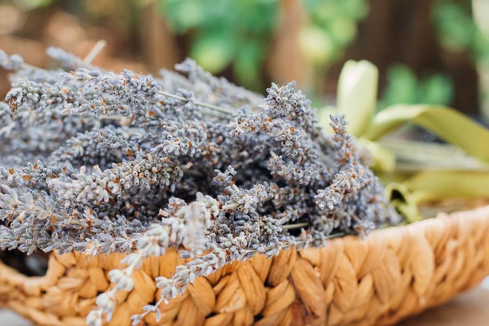 Blur, Macro, Pattern, Plant, Texture, Woven Basket