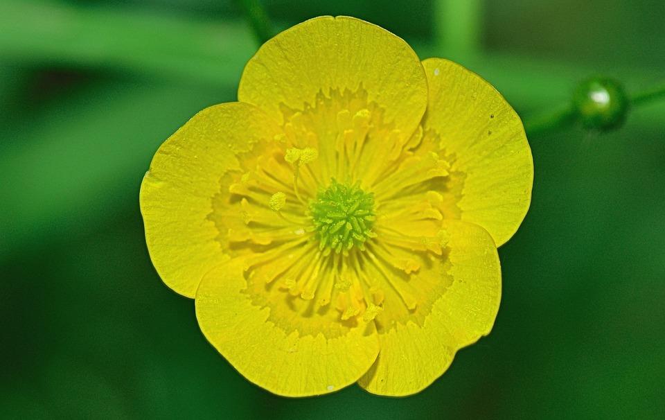Nature, Flower, Flowers, Plants, Garden, Macro, Yellow