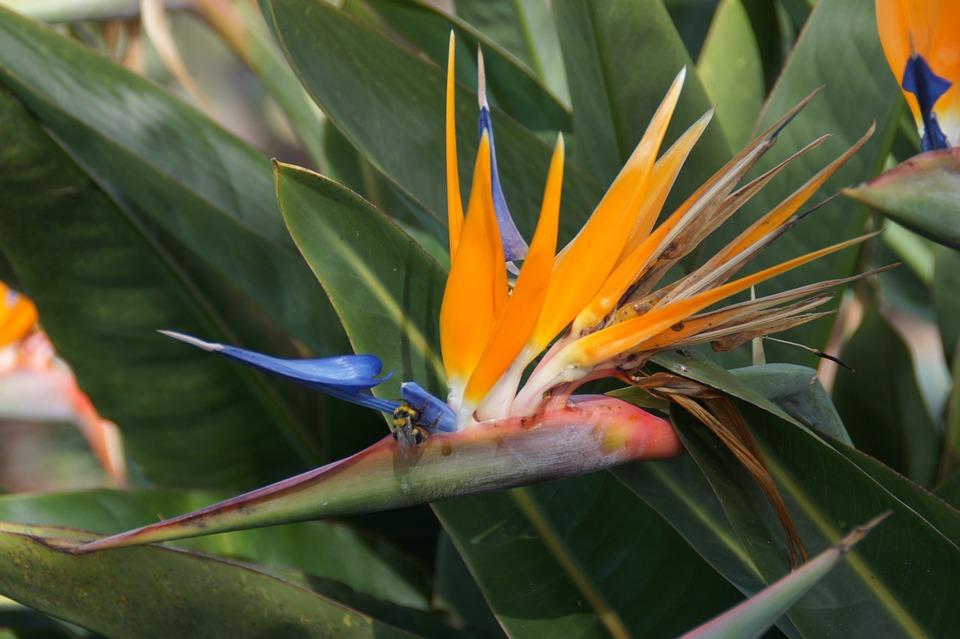 Flower, Orange, Caudata Greenhouse, Caudata, Madeira