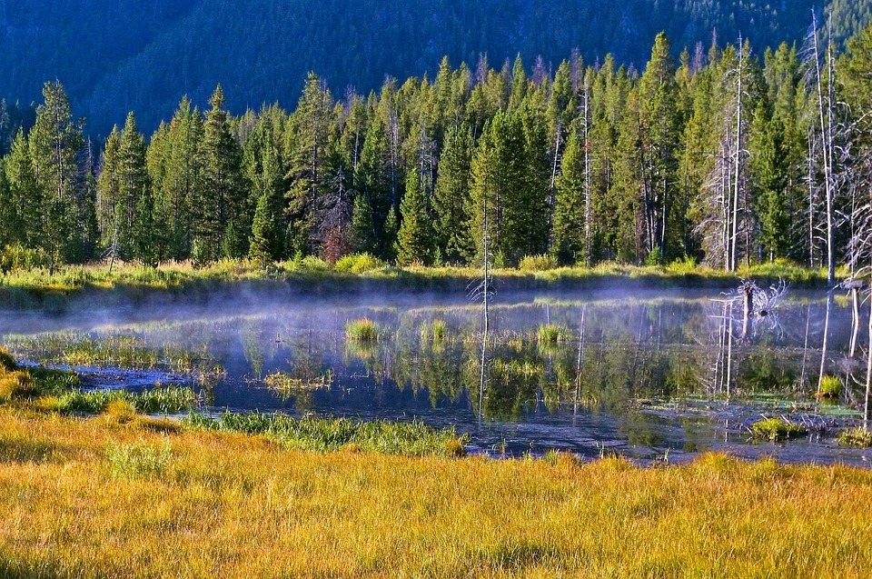 Madison River, Montana, River, Forest, Nature, Stream