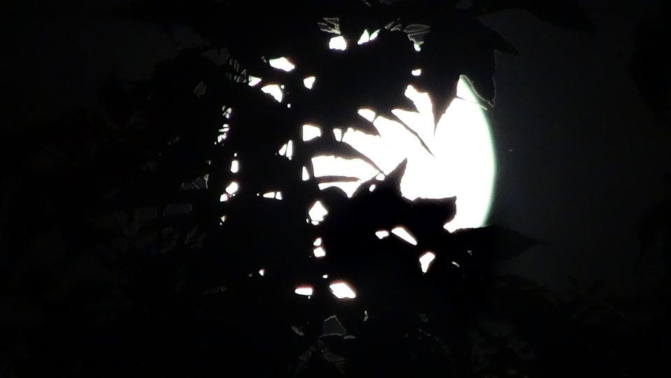 Midnight, Full Moon, Moonlight, Hidden, Leaves, Magic