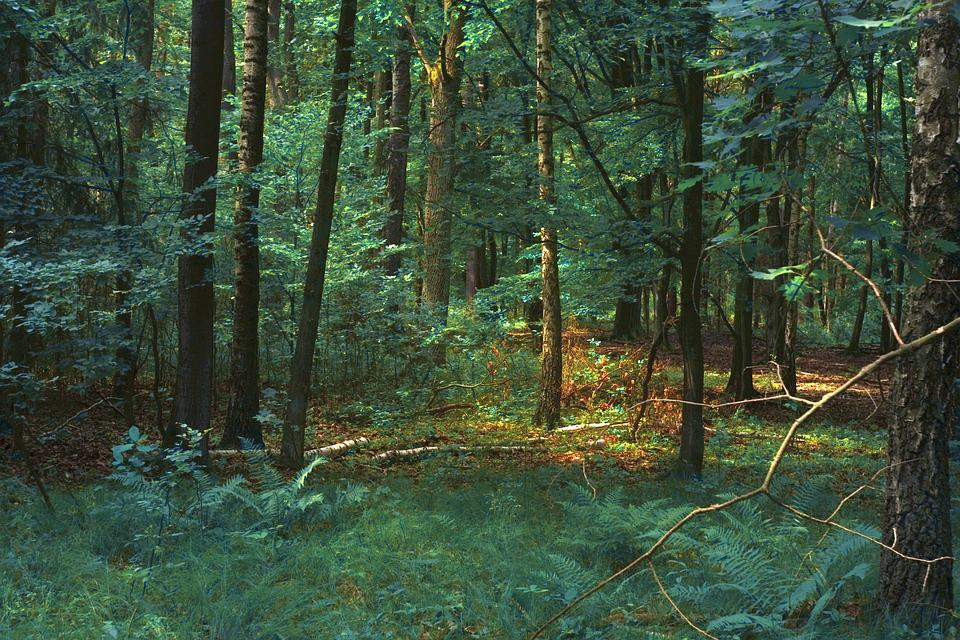 Forest, Magic, Fantasy, Nature, Mysterious, Mystery