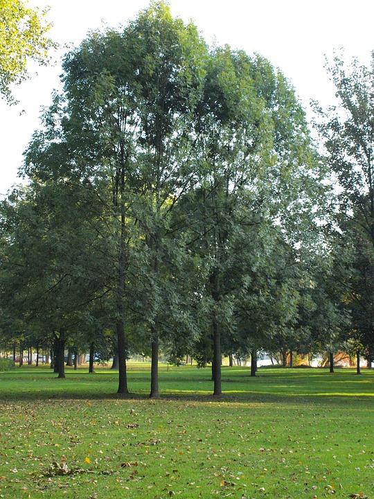 Trees, Park, Main Banks, Main Meadows, Main, River