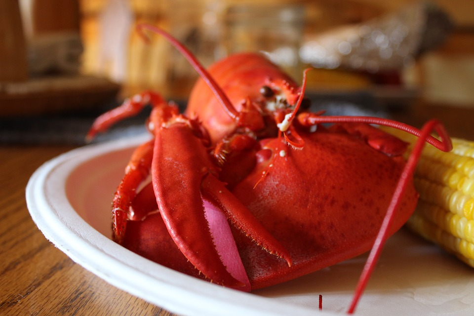 Lobster, Food, Seafood, Maine, New England, Corn