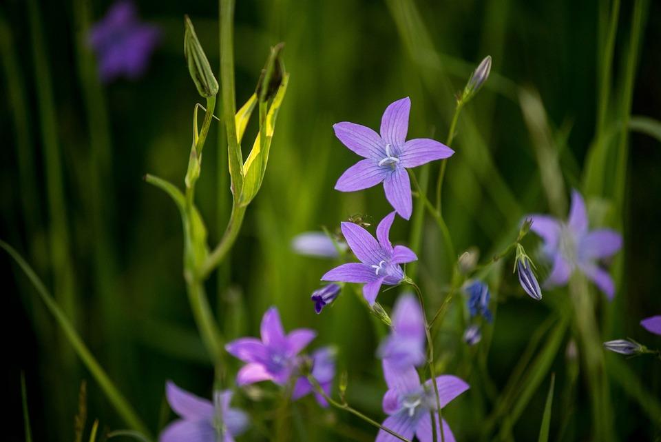 Violet, Flower, Makro, Purple, Plant, Bloom, Garden