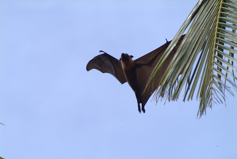 Flying Fox, Maldives