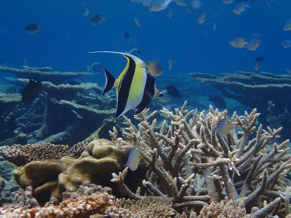 Maldives, The Indian Ocean, Fish