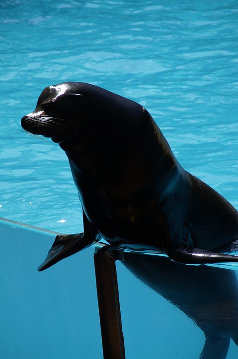 Zoo, Sea Lion, Males, Male, Strong, Supportive