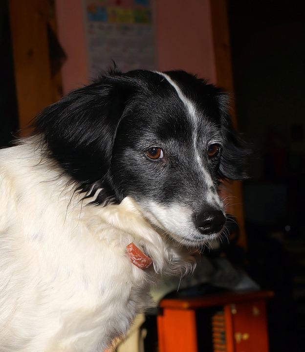Dog, Male, Portrait, Animal, Fur, Pride, Friendly