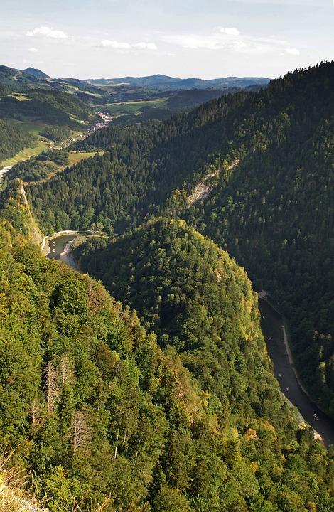 Pieniny, Dunajec, Sokolica, Top, Pine, Malopolska, View