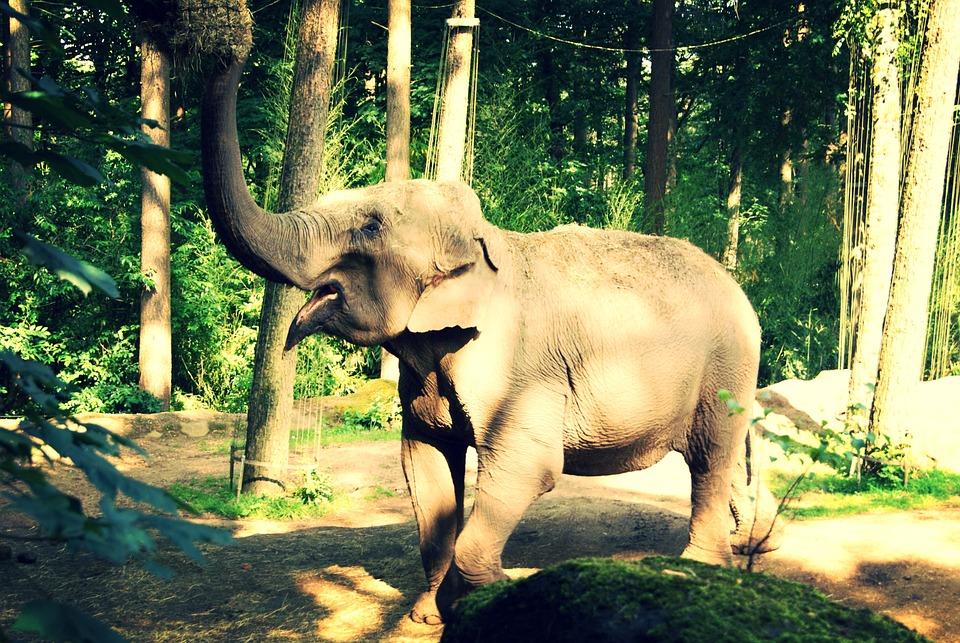 Elephant, Animal, Mammal, Happy, Eating, Grunge