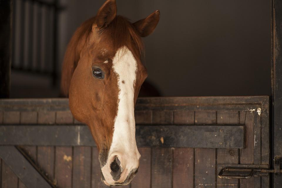 Horse, Animal, The Horses Are, Cute, Nature, Mammal
