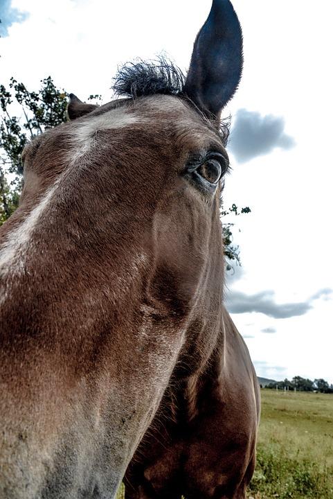 Animal, Nature, Mane, Mammal, Stallion, Farm, Equine
