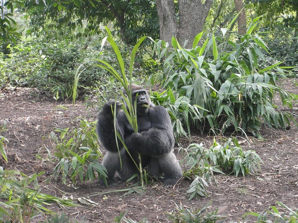 Forest, Monkey, Safari, Animal, Mammal, Jungle, Nature