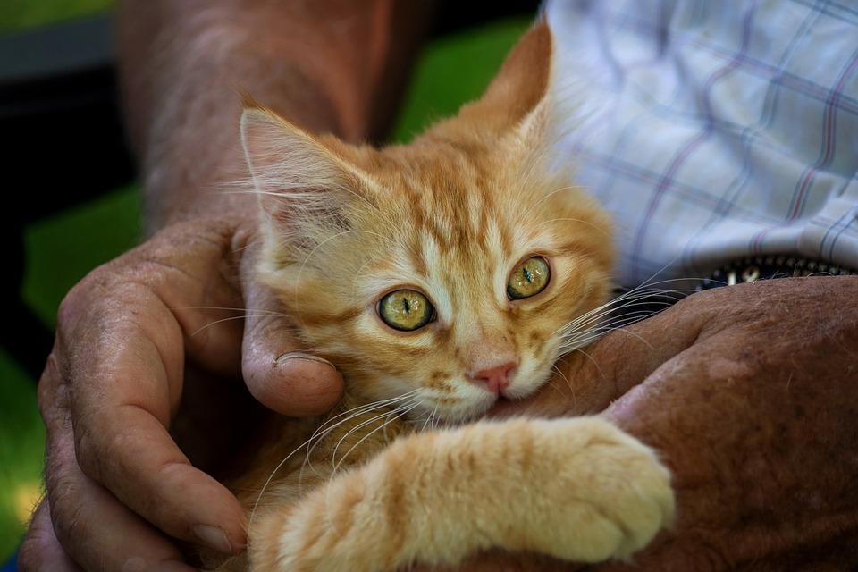 Cute, Cat, Animal, Mammal, Pet