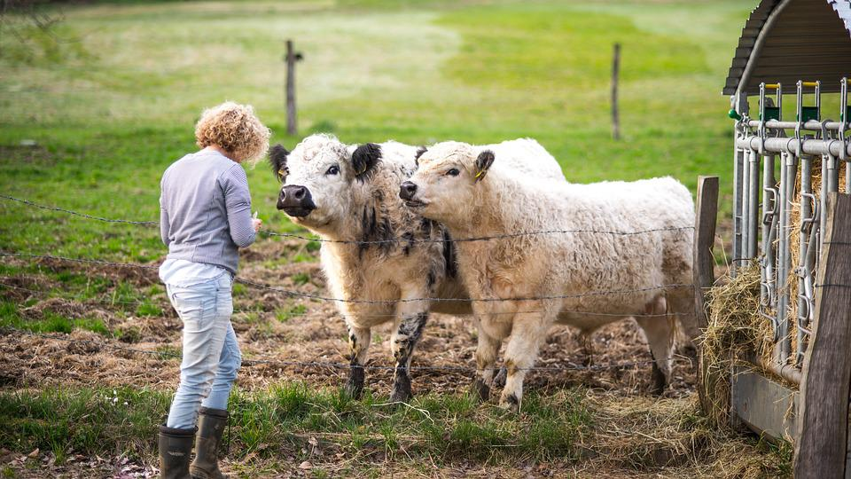 Mammal, Farm, Animals, Agriculture, Grass, Animal