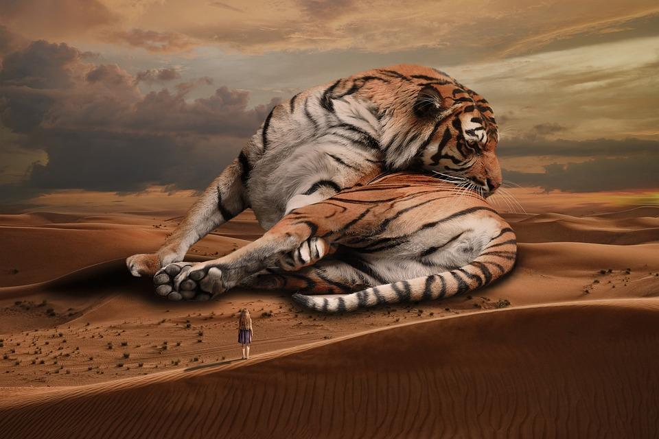 Animal, Tiger, Cat, Wild, Mammal, Predator, Feline, Big