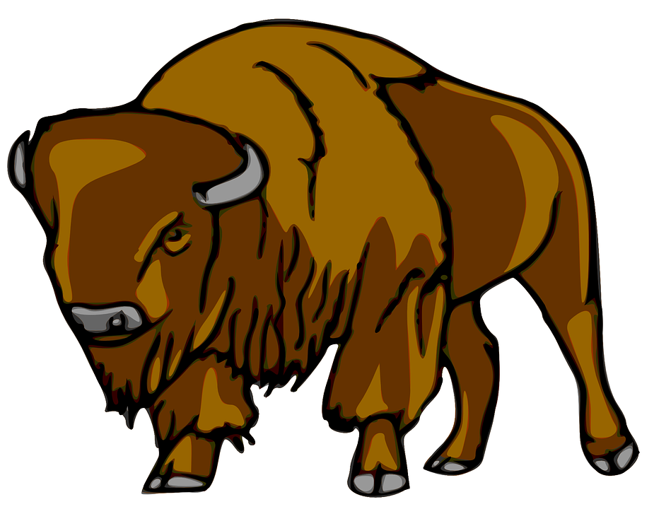Bison, Mammal, Animal, Huge, Heavy, Furry, Brown, Front