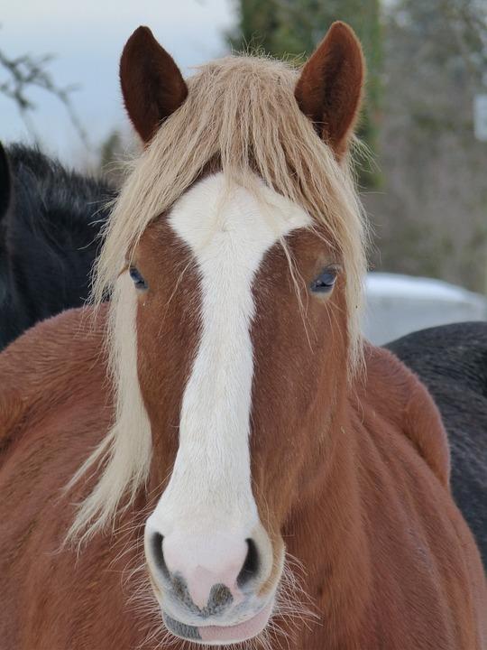Horse, Animal, Mammal, Nature, Pasture, Breeding, Brown