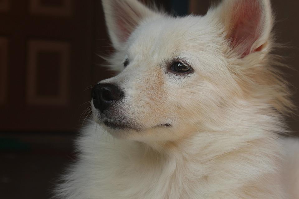 Dog, Canine, Mammal, Pet, Cute
